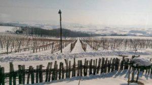 Зимска винска тура у Жупи