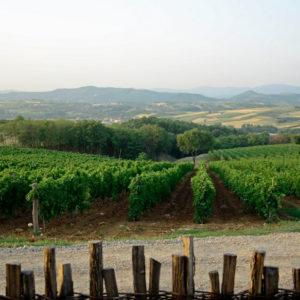 Винске туре кроз Жупу